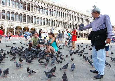 Pigeons, Venice, Italy