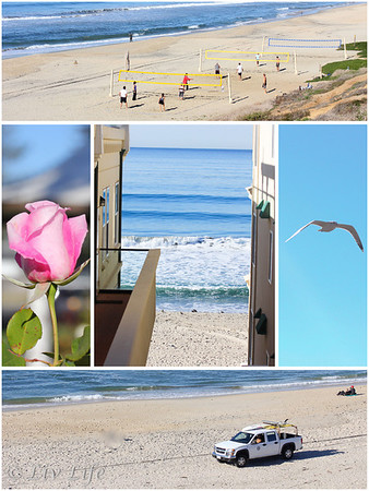 Winter in Carlsbad, CA - beach volleyball, seagulls, lifeguards