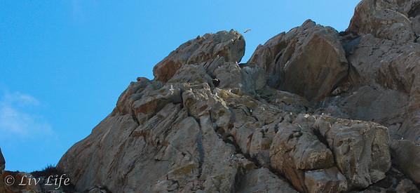 Morro Rock | San Louis Obispo