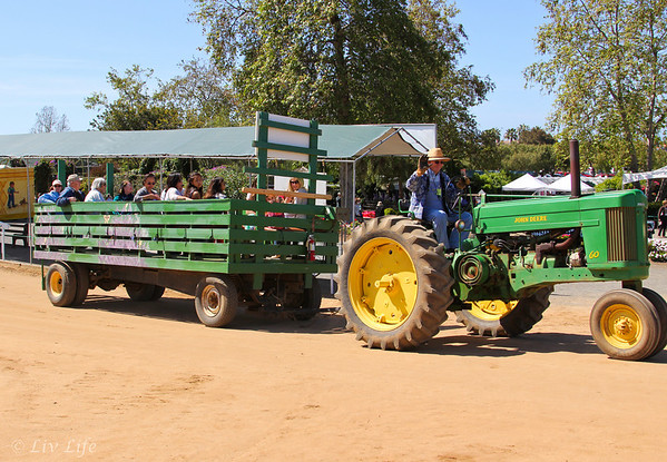 tractor ride at Carlsbad Flower Fields