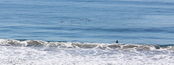 surfer looking at pelicans in Carlsbad California